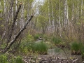 biebrzanski_park_narodowy_bagna2
